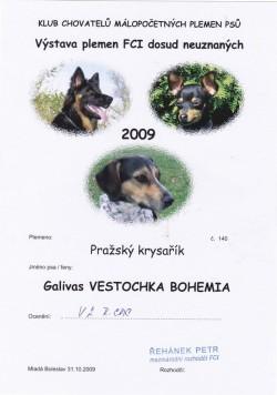 31.10.2009 - Vestochka Bohemia Galivas